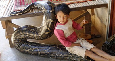 16foot python little boys best friend like-Nagini-and-Voldemort4